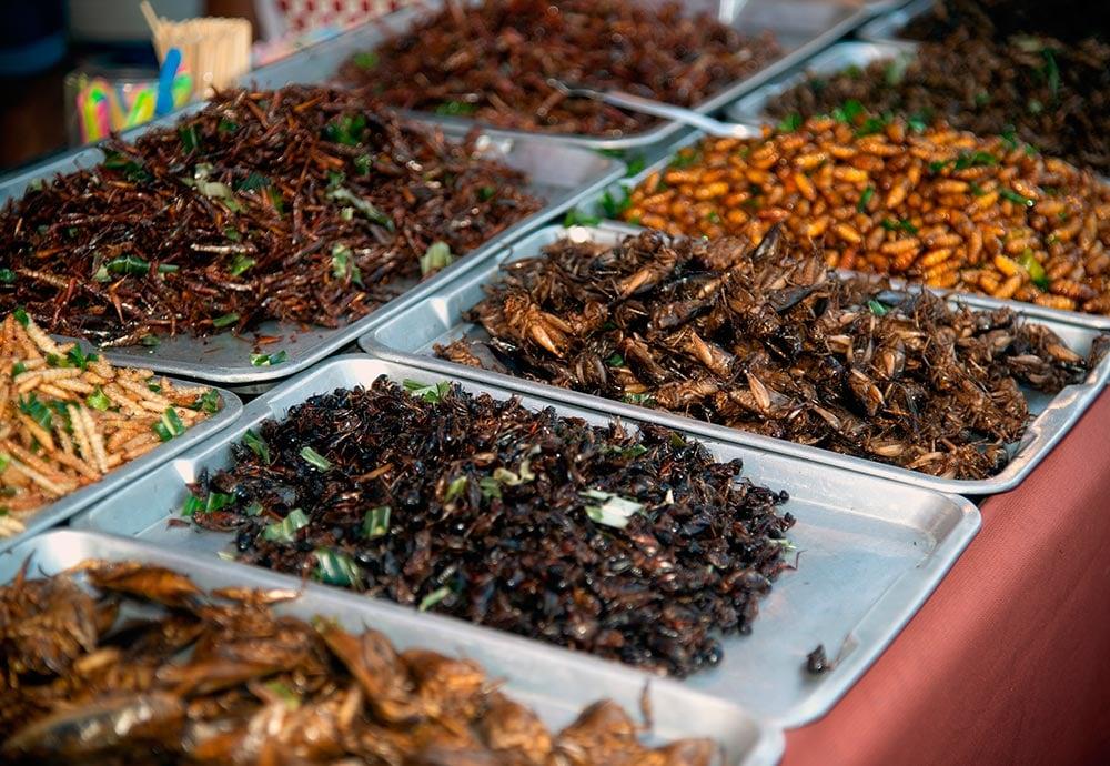 Una muestra de insectos fritos en un puesto de un mercado de Asia